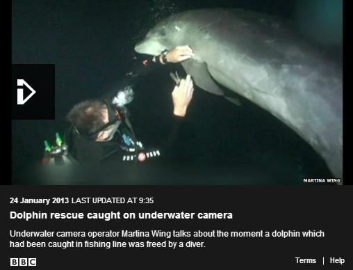 Dolphin rescue video