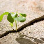 grow-through-BG-crop